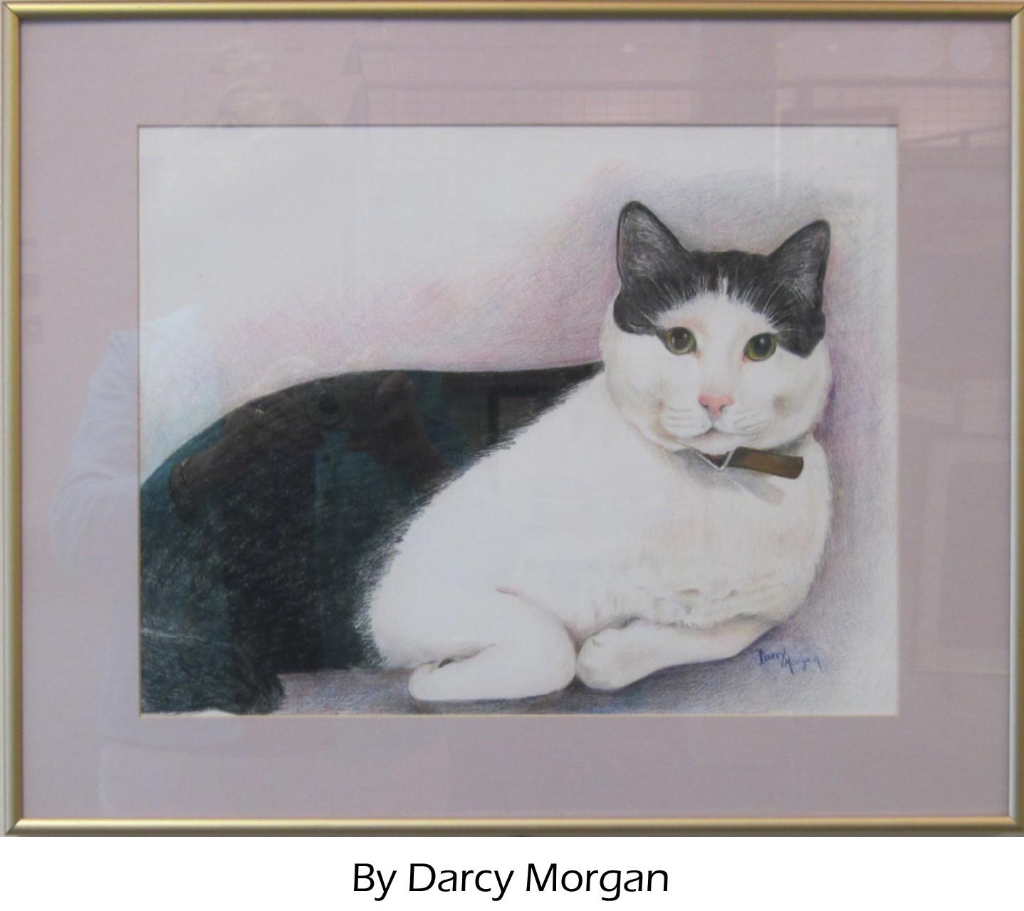 Darcy c